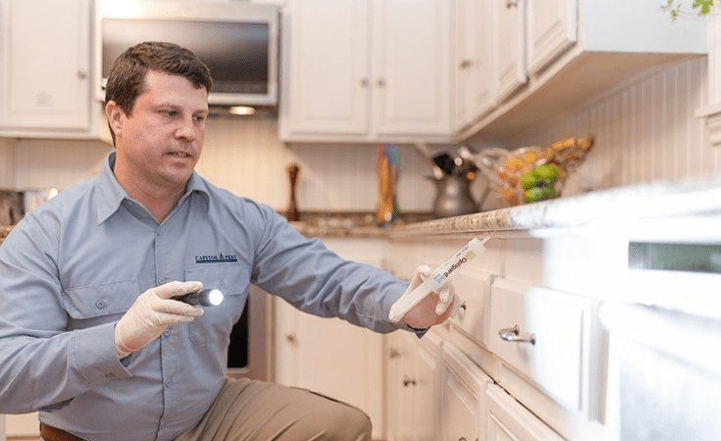All About Roaches in Kitchen Cabinets