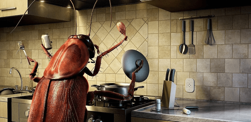 How to Get Rid of Cockroaches in Kitchen | Reviews & Guide ...