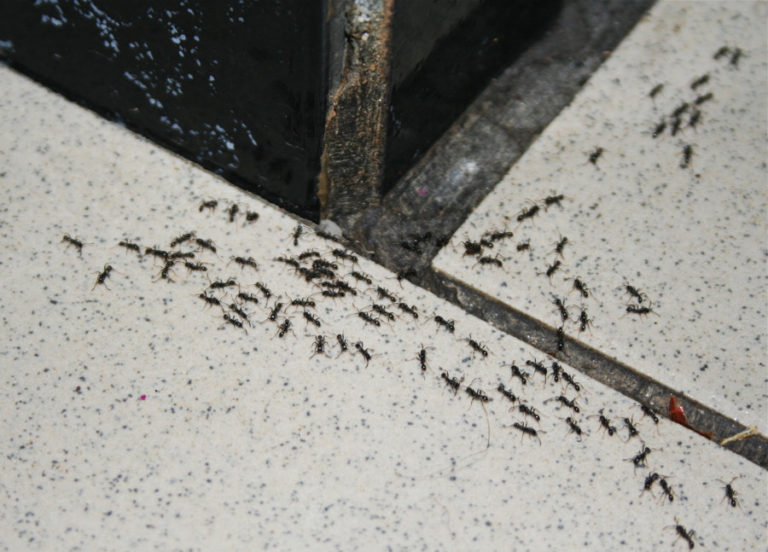 Ants in my kitchen
