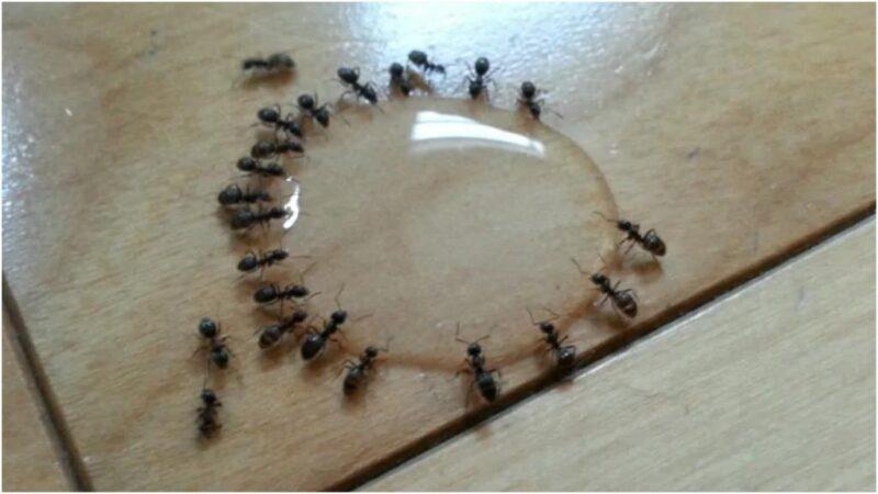 Ants in my kitchen