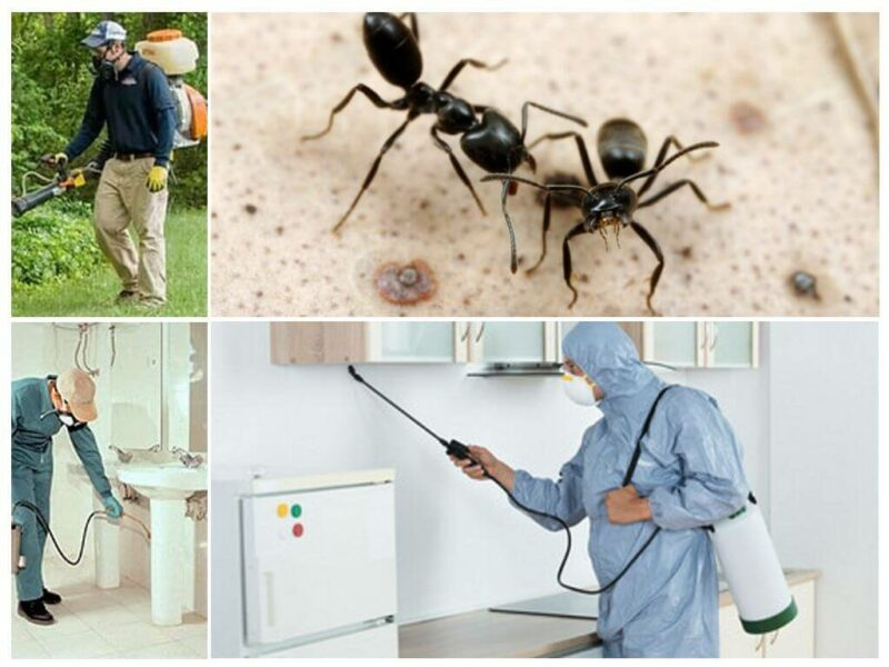 how to get rid of small ants in kitchen