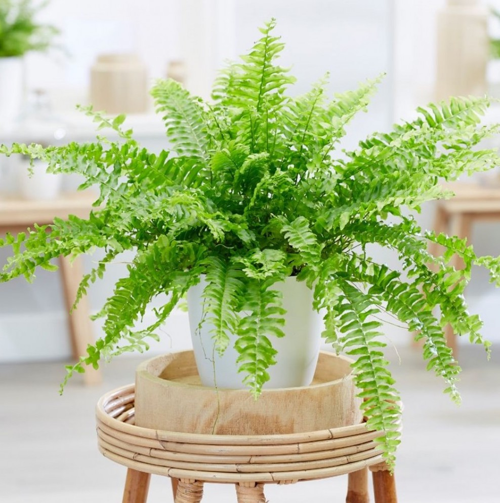 low light air cleaning plants