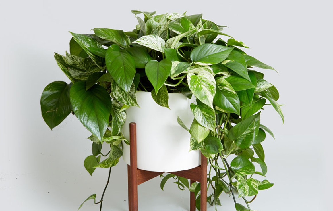 best low light houseplants to purify air