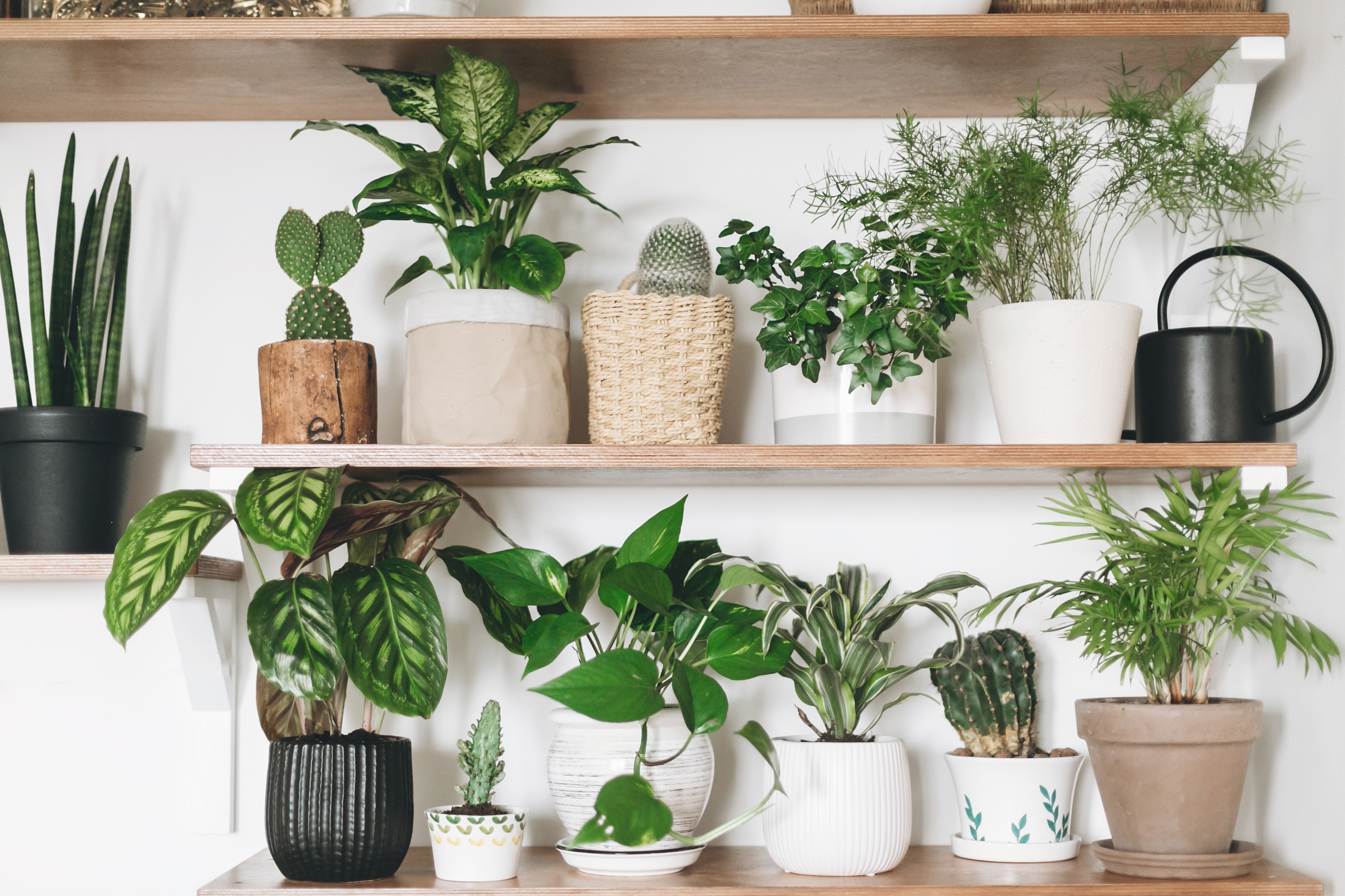 air purifying plants low light