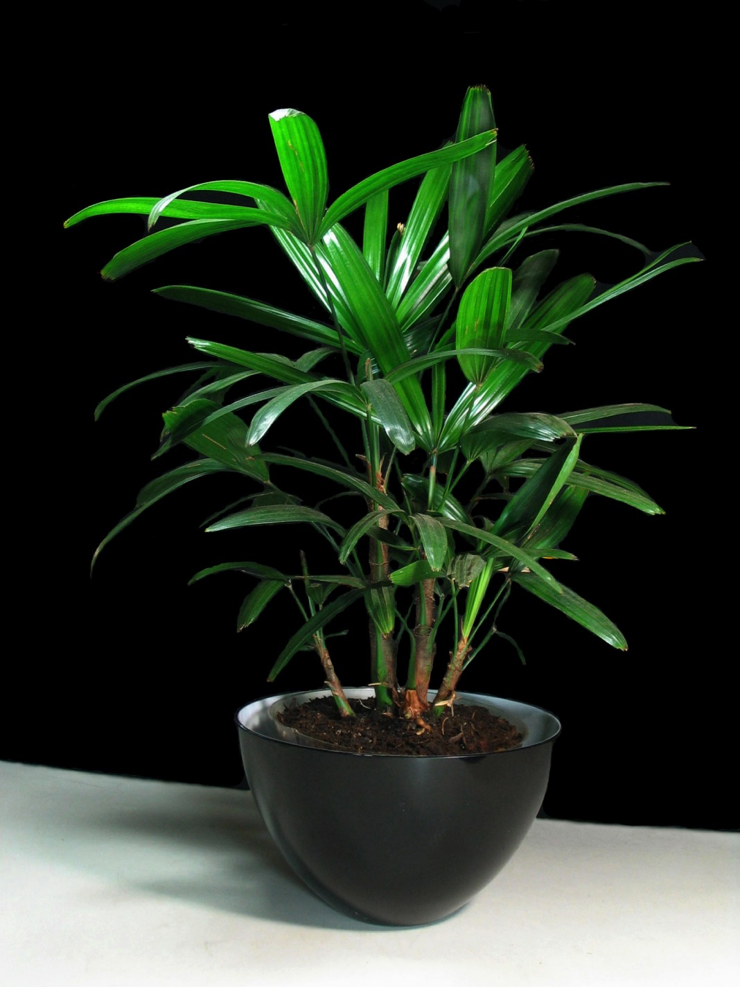 low light houseplants clean air