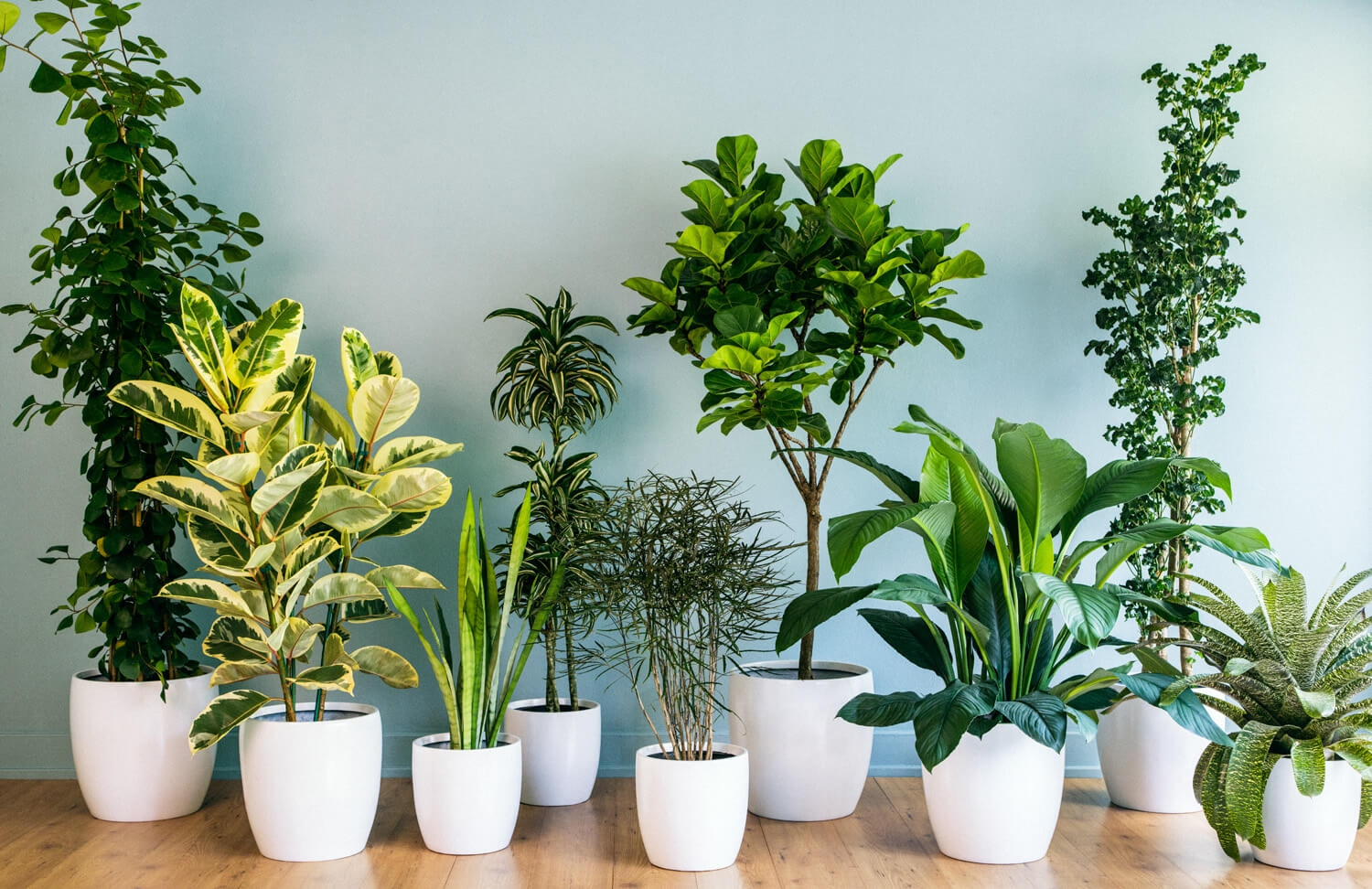 low light air purifying plants