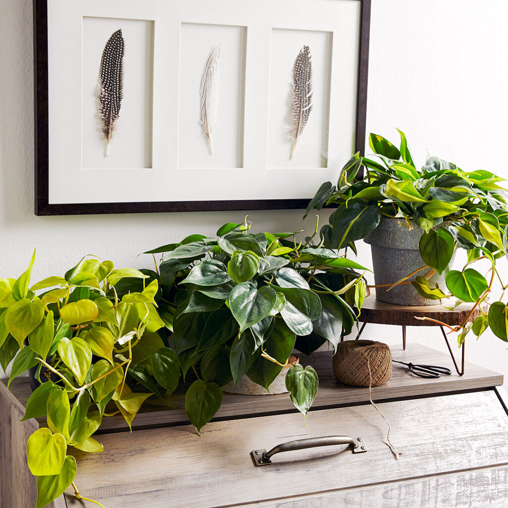 11 Best Air Purifying Plants Low Light For Your Home