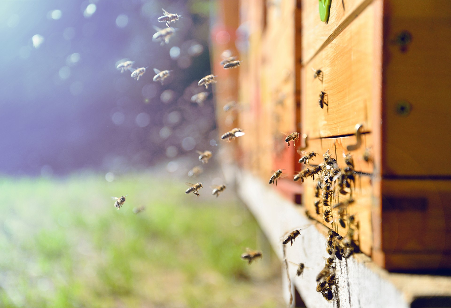 keep bees away
