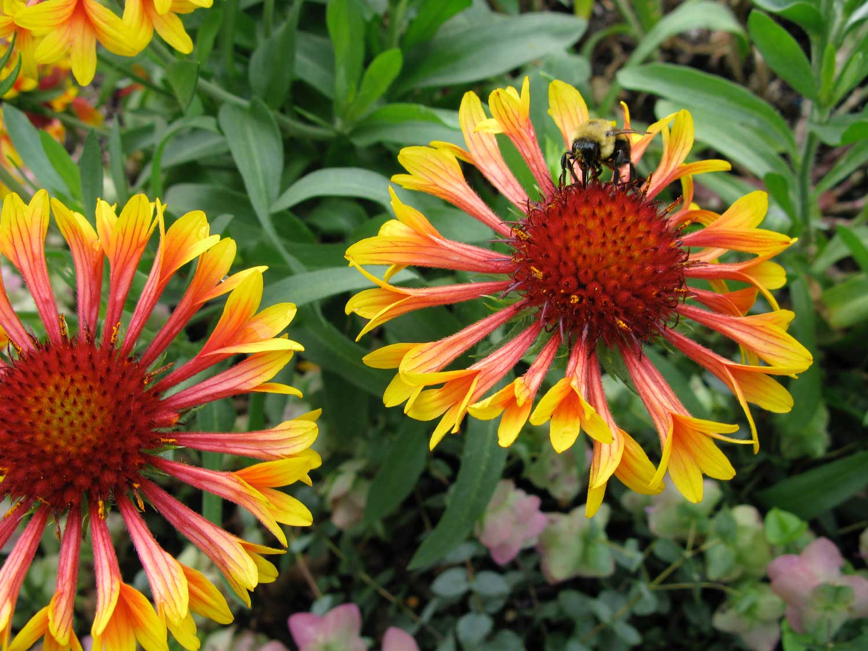deter bees