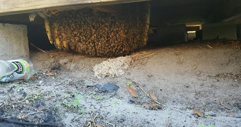 ways to keep bees