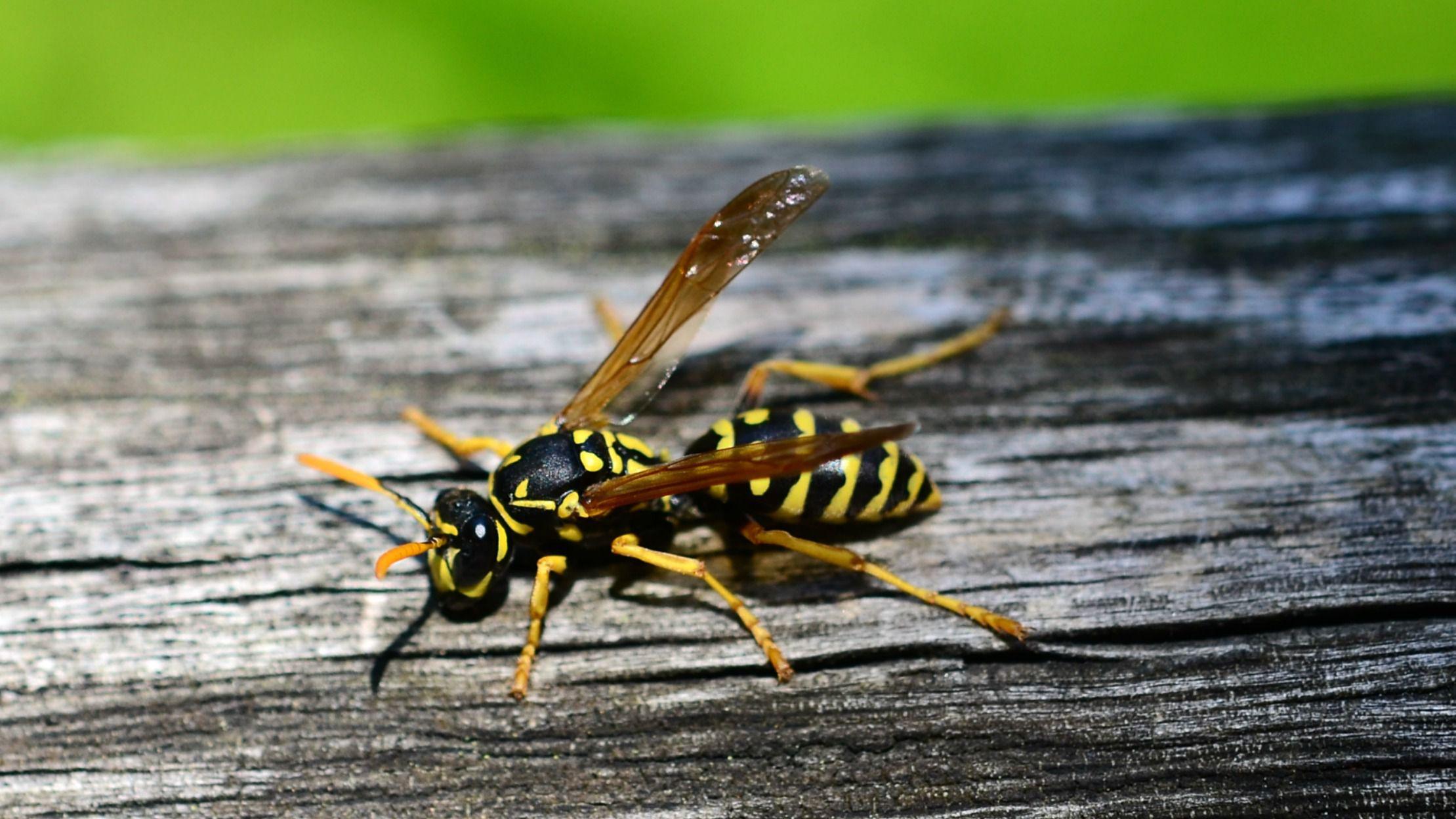 repel bees