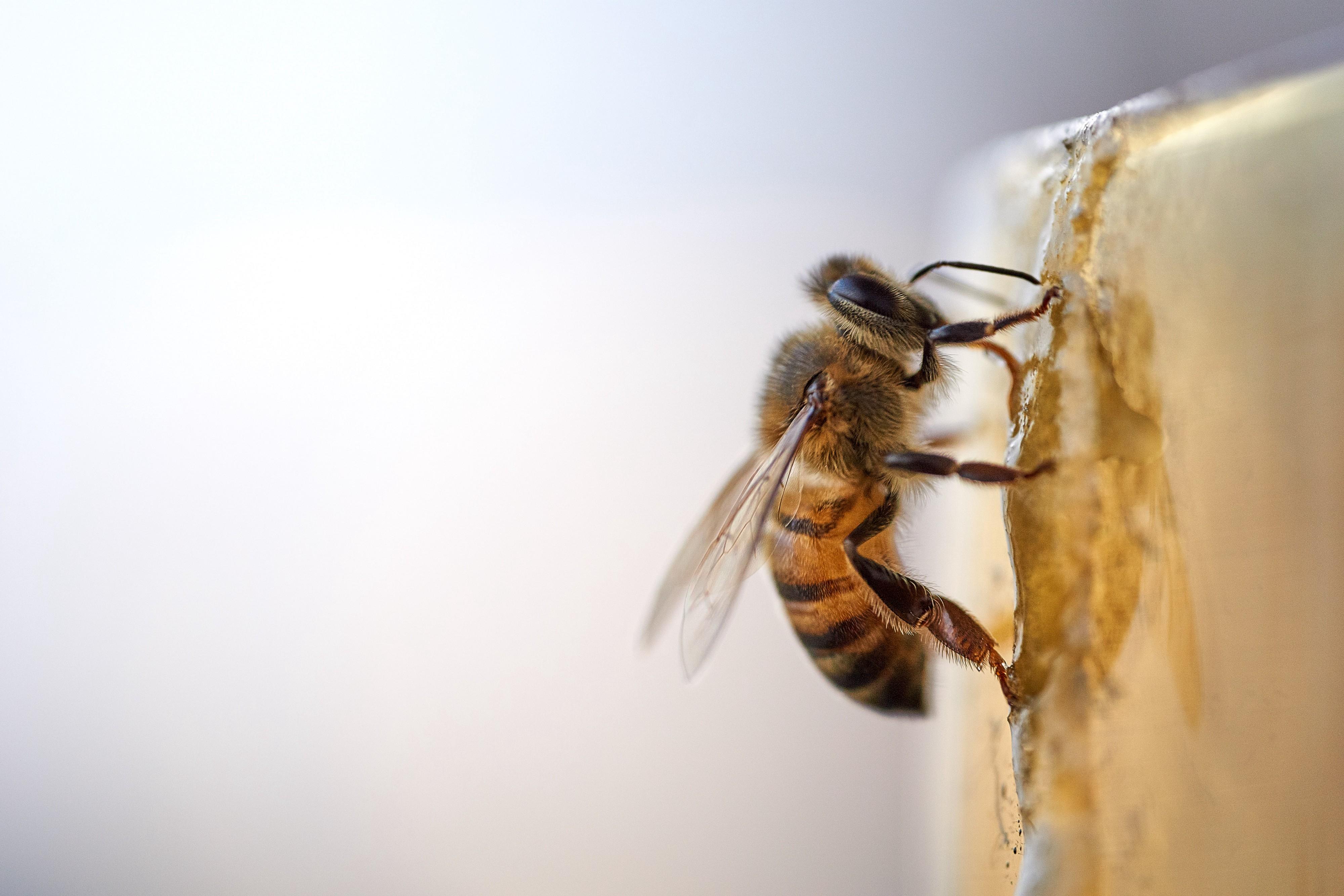 rid of bees