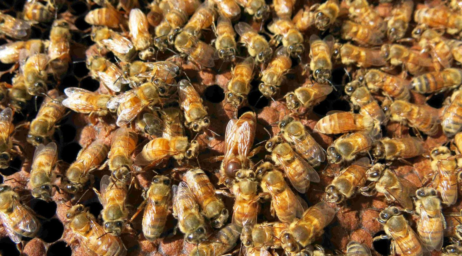 bees away